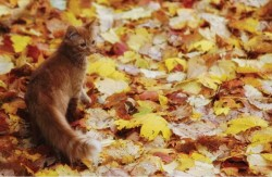 Autumn red kitten