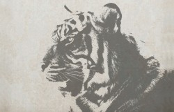 Tiger Graphics