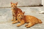 Two red cats