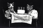 Cats with Birthday Cake