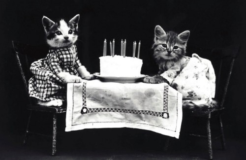 Cats with Birthday Cake Postcard